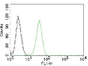 Anti-CD31 / PECAM-1 (Endothelial Cell Marker) Monoclonal Antibody(Clone: C31.10)