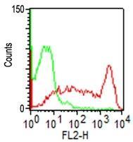 Monoclonal Antibody to CD45RO (Clone: C45.1)