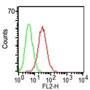 Monoclonal Antibody to CD34 (Clone: ICO-115)