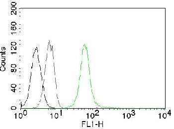 Anti-Vimentin (Mesenchymal Cell Marker) Monoclonal Antibody(Clone: VM452)-CF488
