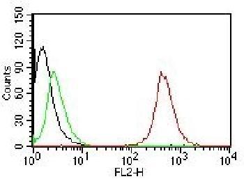 Anti-CD63 (Late Endosomes Marker) Monoclonal Antibody(Clone: NKI/C3)