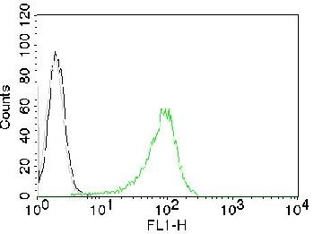 Anti-Human Nuclear Antigen (HNA) (Human Cell Marker) Monoclonal Antibody(Clone: 235-1)-CF488