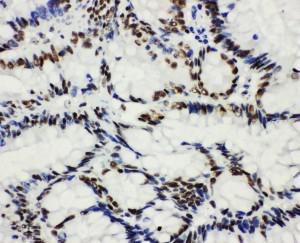 Anti-HDAC3 Polyclonal Antibody