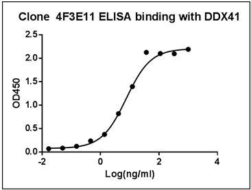 Mouse Monoclonal Antibody to Human DDX41 (Clone : 4F3E11)