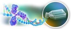 Recombinant Biosimilar Antibodies