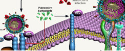 Toll-Like Receptors in COVID-19 Pathogenesis