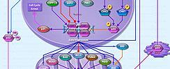 p53 Mediated Apoptosis