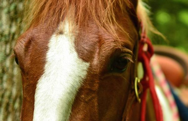 Horse-Listing-1