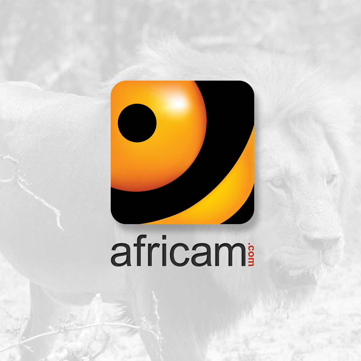 Olifants River LIVE Wildlife Channel - Africam