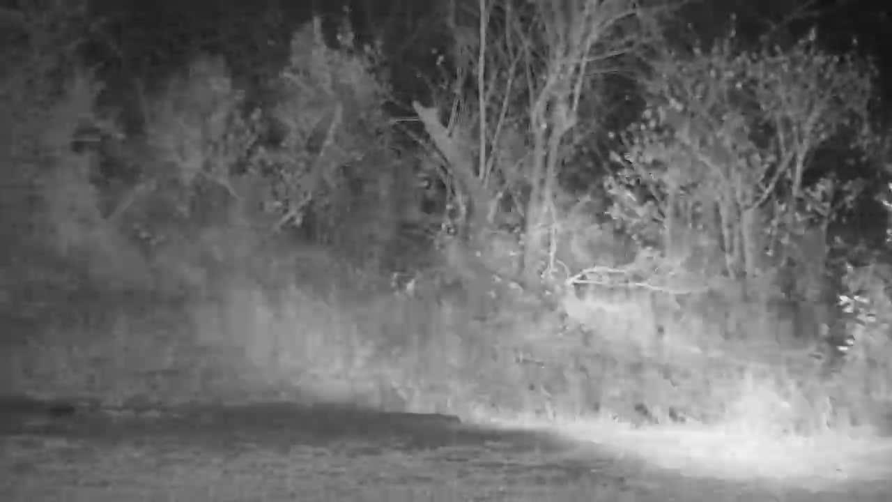 Africam - VIDEO: Leopard pays pan a visit