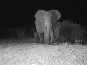 Elephants at Cat Eye