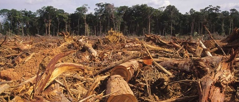 How Brazilian Big Agriculture is Destroying the Brazilian Amazon