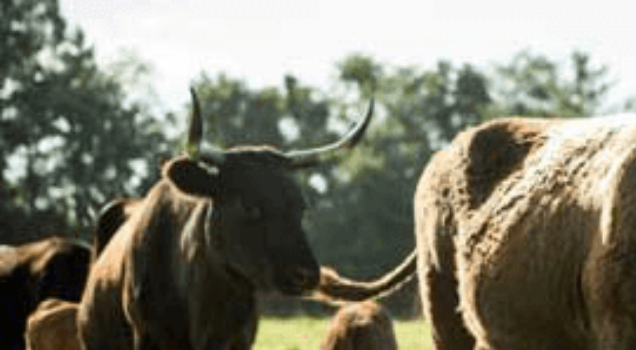 Get livestock insurance from Nationwide