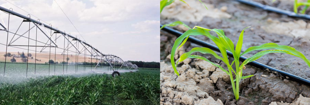 Comparison between pivot and drip irrigation in corn cultivation