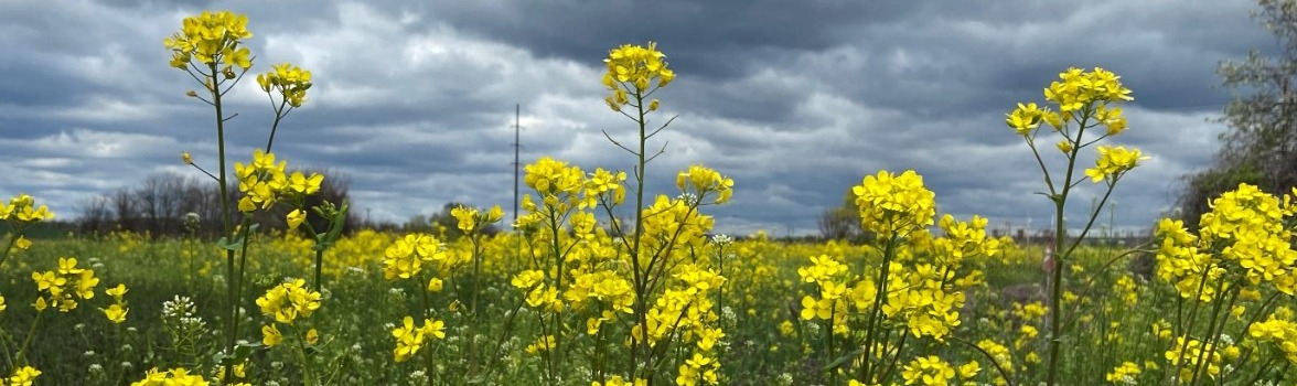 Here Are the Winners of Our 31 Days of Cover Crops Photo Contest!