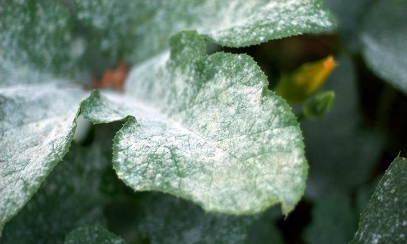 7 Common Plant Diseases: How to Identify & Treat Them