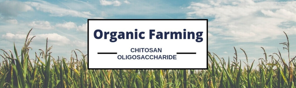 Best guide for chitosan oligosaccharide in agriculture