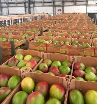 The Issues Faced By The Fruit And Vegetable Importing Business