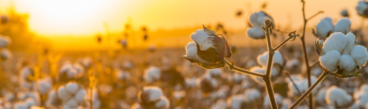 How Precision Technology can Tackle Cotton's Irrigation and Pests' Challenges in the 2020s