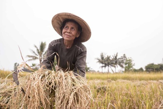 How farmers can help eradicate world hunger – in 10 steps