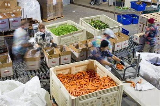 Solving the Buzzle for B2B Agricultural Market Places
