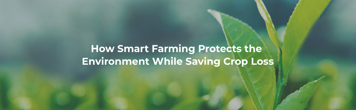 How Smart Farming Protects the  Environment While Saving Crop Loss