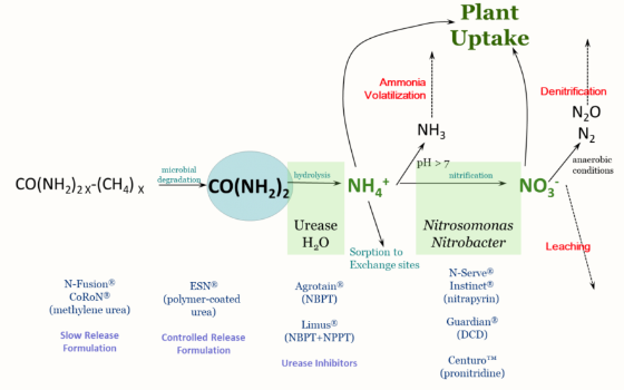 Are Nitrogen Stabilizers Worth Using? 3 Factors to Consider