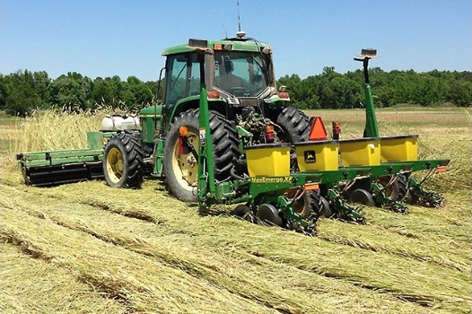 How to Time Cover Crop Termination and Get an Effective Burndown