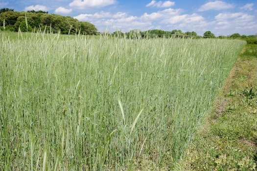 Early Cover Crop Benefits: What Can You Expect in the First Year?