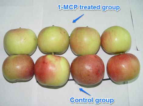 1-Methylcyclopropene(1-MCP) Ethylene Inhibitors
