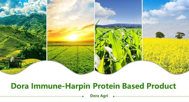 Harpin Protein Plant Elicitor For Cannabis