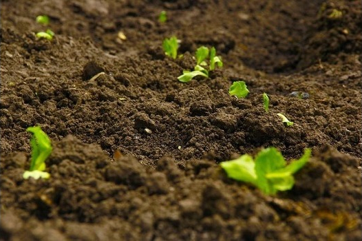Chitosan & mycorrhiza complement each other for soil healthy
