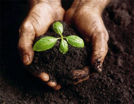 Benefits of humic acid in agriculture