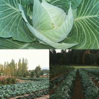 Dudink's Garden