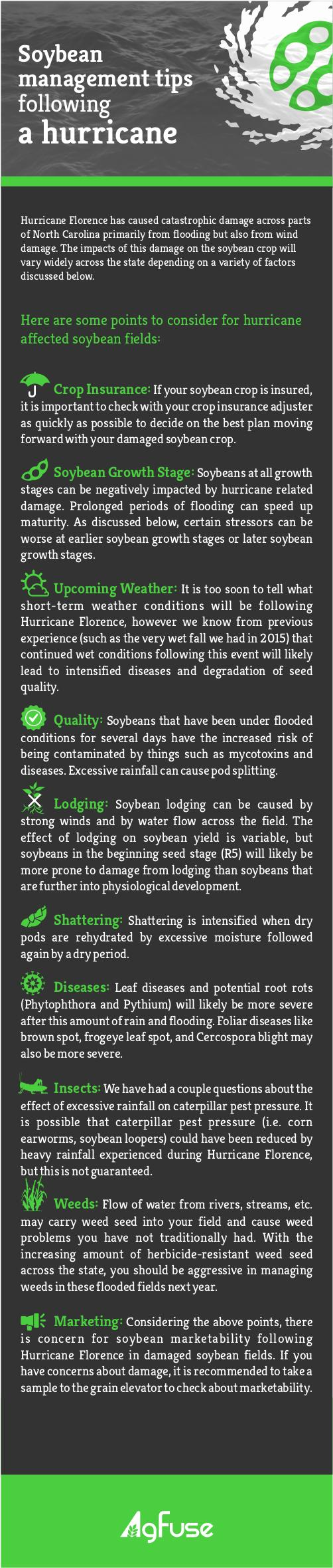 Soybean Management Tips Following a Hurricane Infographic