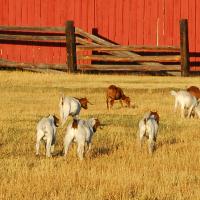 Specialty Livestock