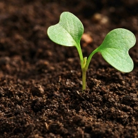 #SoilMatters