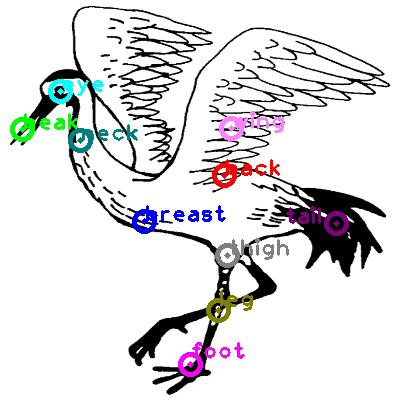 animal-crane_0016.png