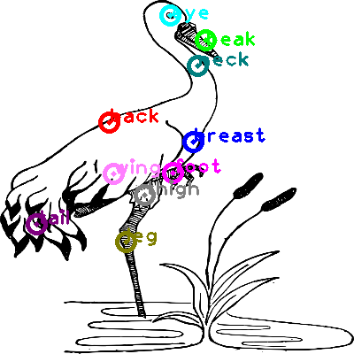 animal-crane_0017.png