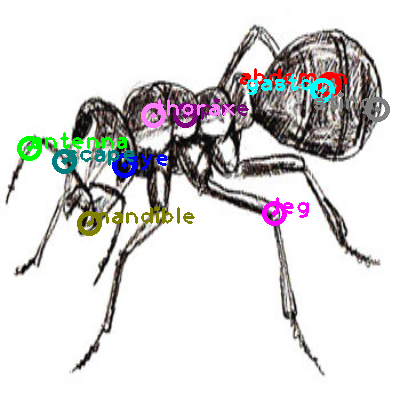ant_0028.png