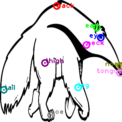 anteater_0005.png