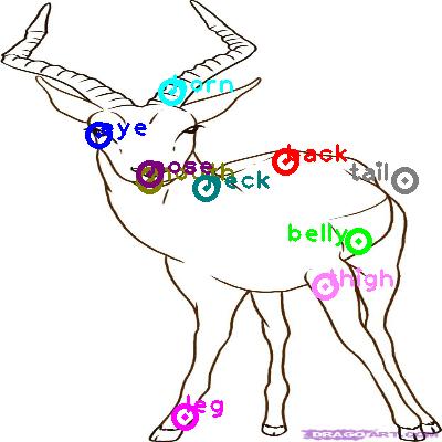 antelope_0001.png
