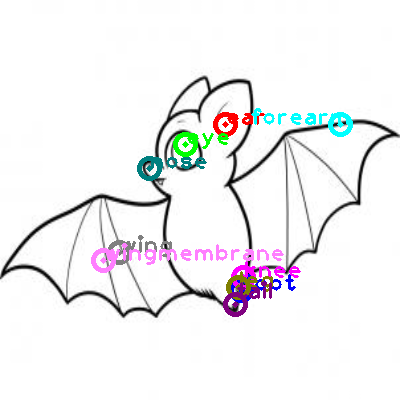 bat_0001.png