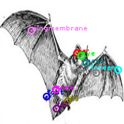 bat_0002.png