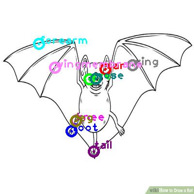 bat_0004.png
