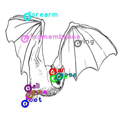 bat_0005.png