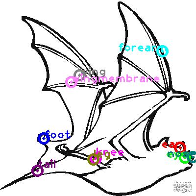 bat_0007.png