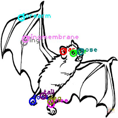bat_0015.png