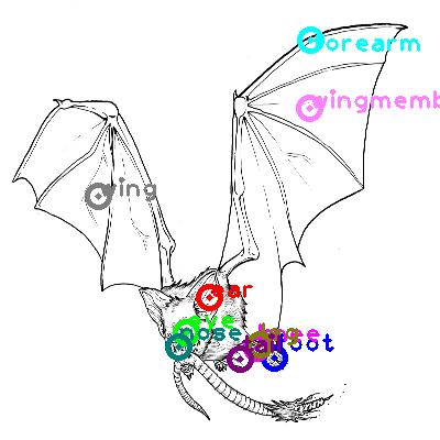 bat_0016.png