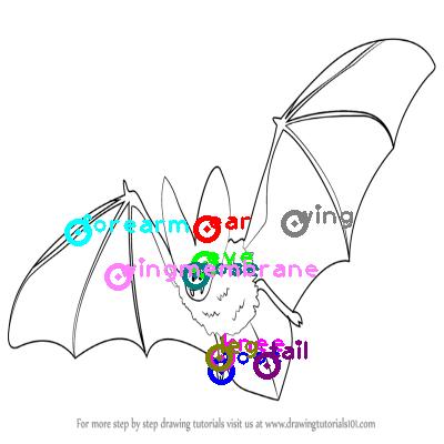 bat_0021.png